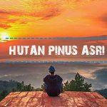 Hutan Punis Asri - Photo by @tooheer