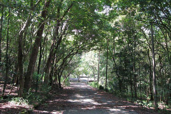 Wisata Hutan Wanagama Gunungkidul