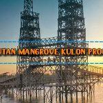 Wisata Hutan Mangrove Kulon Progo
