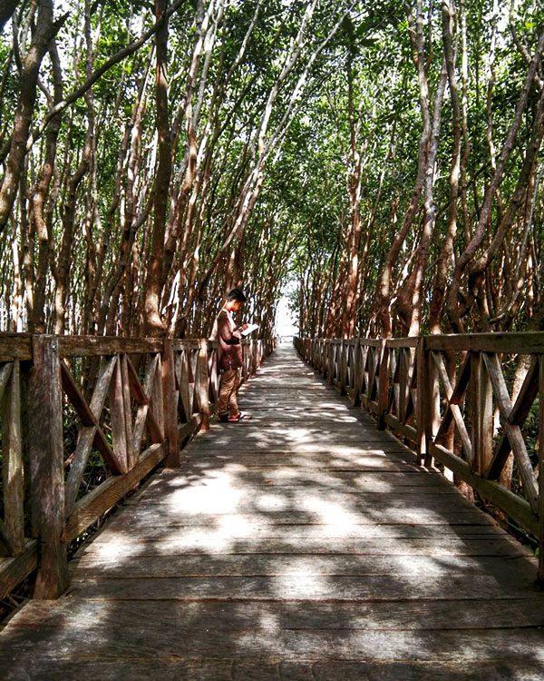 Lokasi Hutan Mangrove Kulon Progo