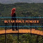 Wisata Hutan Pinus Pengger Jogja